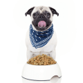 Dieting Your Dog Icon