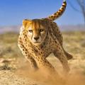 Savanna Simulator: Wild Animal Games Icon