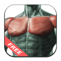 Best Chest Workout Icon
