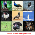 Best Bird Ringtones - 1.0 Icon