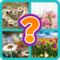 Look At Pics And Guess A Word Icon