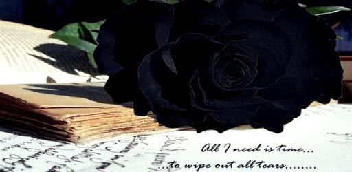 Black Rose Wallpaper apk