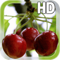 Berry Cherry LWP Free Icon