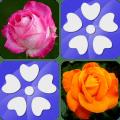 Pairs Flowers Icon