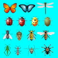 AtoZ Insects Name Prime Icon