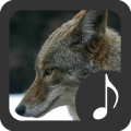 Coyote Sounds Icon