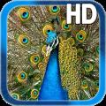 Birds Peacock LWP Free Icon