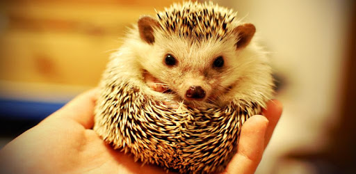 FREE hedgehog Funds 2019 apk