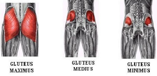 All Glutes Exercises apk