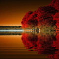 Red Tree Lake LWP Icon