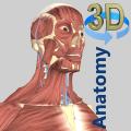 3D Anatomy Icon
