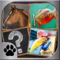 Memory Mach - Jungle Animals Icon