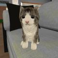 Kitty Cat Simulator Icon