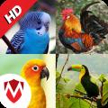 100 Bird sounds : Ringtones, Wallpapers Icon