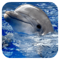 Dolphins. Live Video Wallpaper Icon