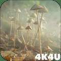 4K Mushrooms and Smoke Live Video Wallpaper Icon
