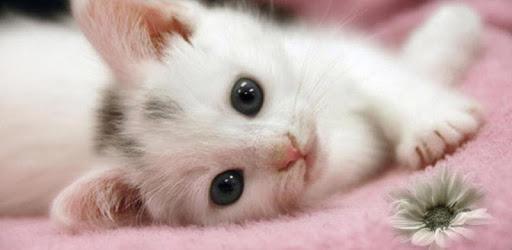 Cute Cat Live WallPaper apk