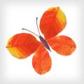Labo Leaves(3+) Icon