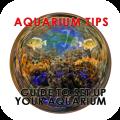 Aquarium Tips - Guide To Set Up Your Aquarium Icon