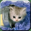 Kitten - HD Wallpapers Icon