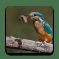Birds Of Europe Icon