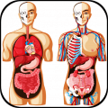 3D human anatomy. Videos of the human body Icon