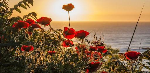Imágenes de flores apk