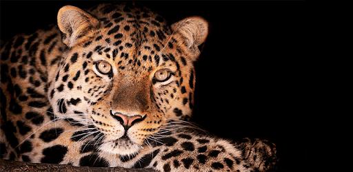 4K Leopard Lock Screen apk