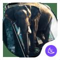 Elephant APUS Launcher theme Icon