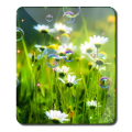 Free Summer New HD LWP Icon