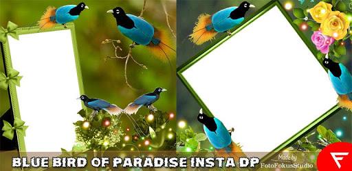 Blue Bird of Paradise Insta DP apk