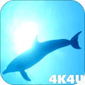 4K Dolphins Video Live Wallpaper Icon