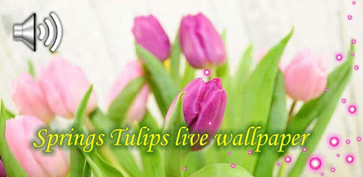 Springs Tulips Live Wallpaper apk