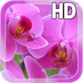 Pink Orchid LWP Free Icon
