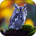 Owl Live Wallpaper : 7fon & LWP Icon