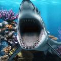 3D Shark Live Wallpaper Icon