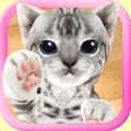 3D Cute Cat Live Wallpaper Icon