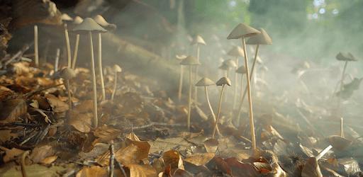 4K Mushrooms and Smoke Live Video Wallpaper apk