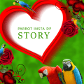 Parrot Insta DP Icon