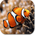 Clown Fish HD Wallpapers Icon