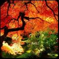 Осень Icon