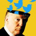 Trump Twitter Icon