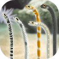 Garden Eel Pet Icon