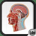 Atlas of Anatomy (Human) Icon