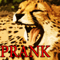 Prank Angry Cheetah Icon