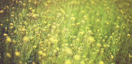 Pollencheck apk