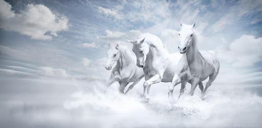 Nouvelles des courses de chevaux apk