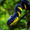 Snake Live Wallpaper : 7fon & LWP Icon