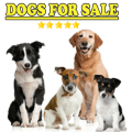 Dogs for sale Icon