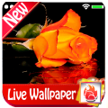 Roses Live Wallpaper 2019 free flowers/Roses LWP Icon